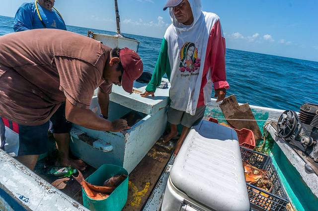 Buying fish from the fishermen in the middle of the sea.